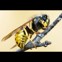 Wasp Chilling Being a Badass